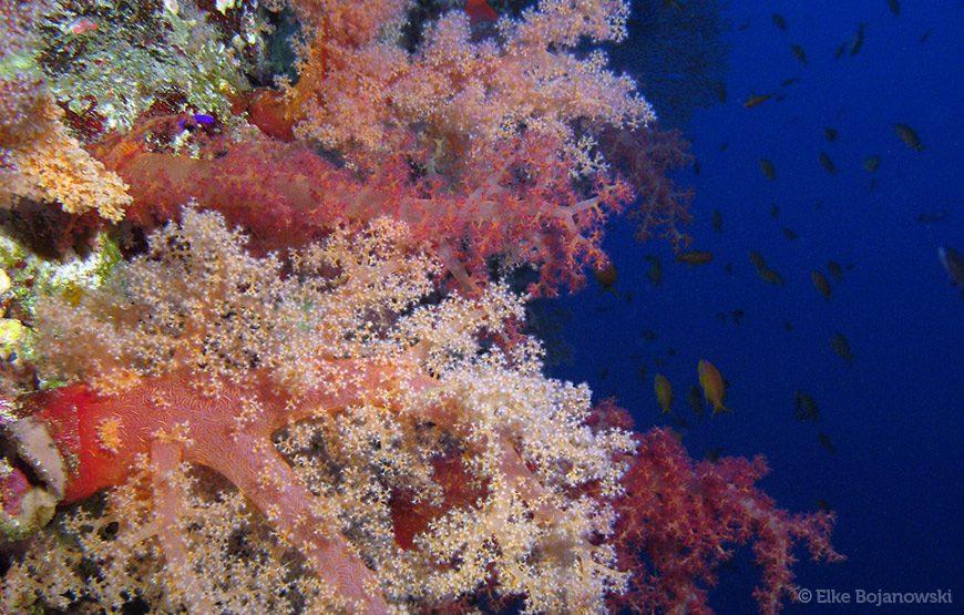 Red Sea trip