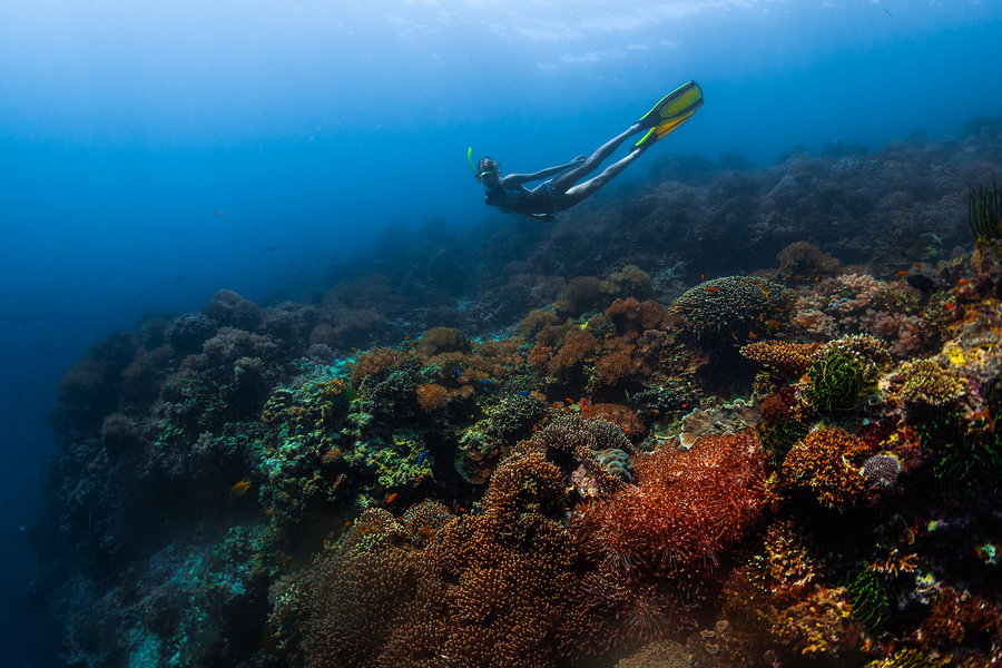 Diving Philippines diving over the coral reefs