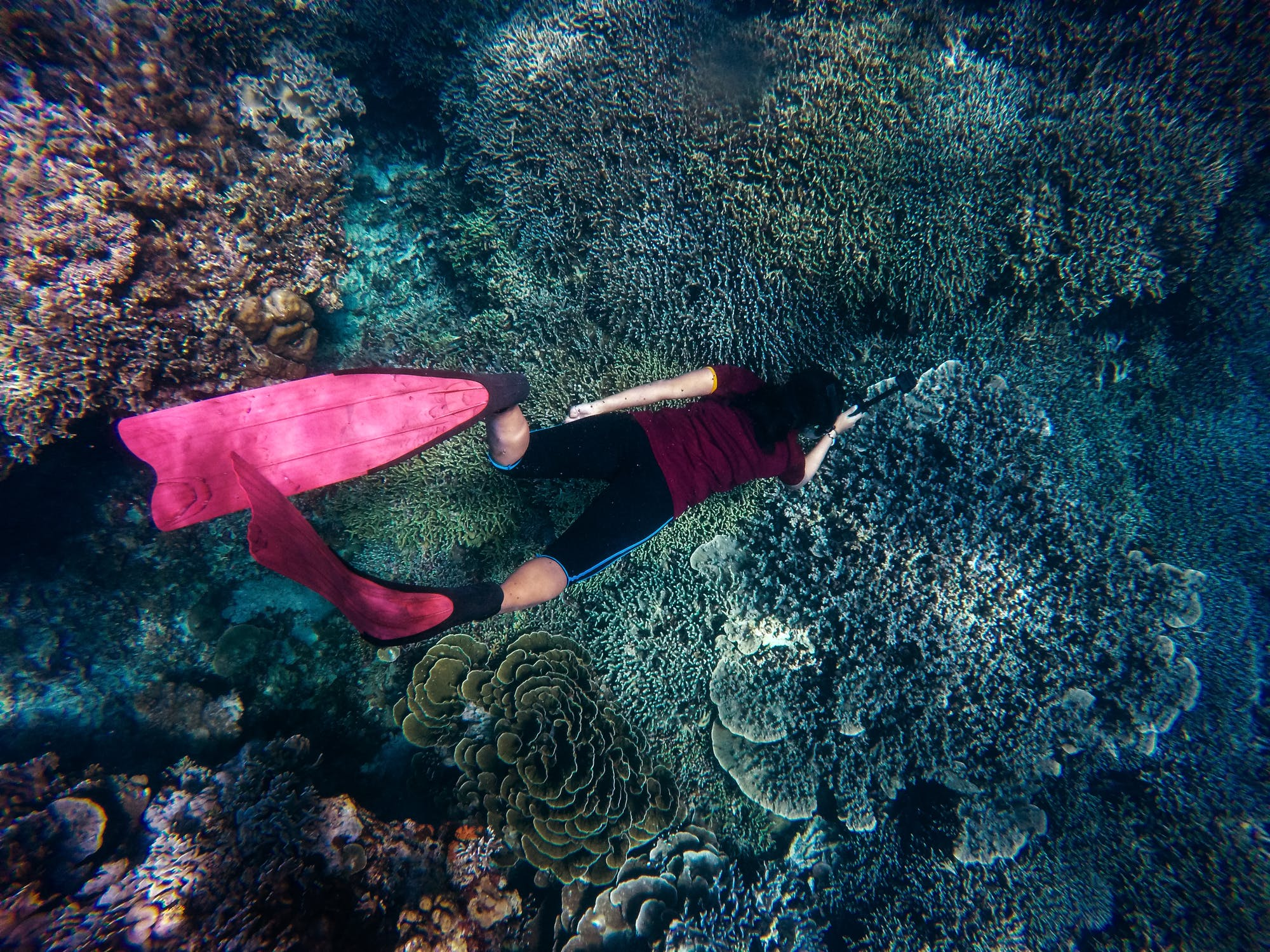Diving in the coral reefs