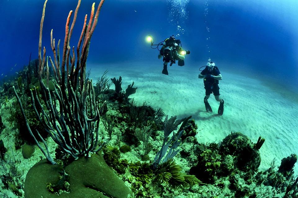Scuba Diving in a Reef