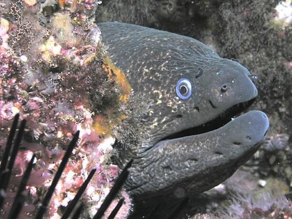 Top 10 most dangerous fish - the Moray Eel