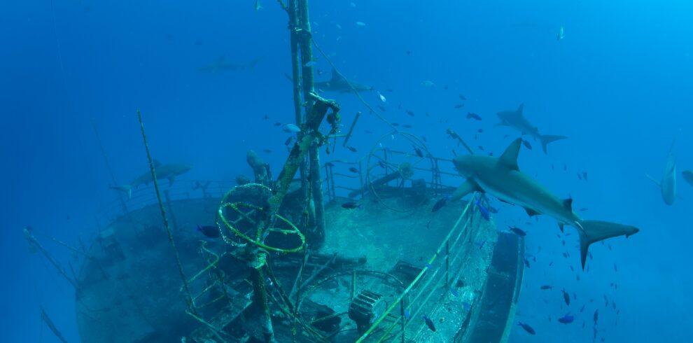 Wreck & sharks
